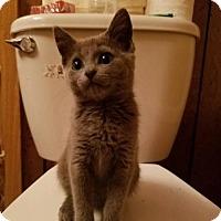 Adopt A Pet :: Gamora - Whitewater, WI
