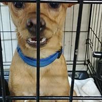 Adopt A Pet :: Frappy - Ogden, UT