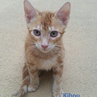 Adopt A Pet :: Kibou - Fort Pierce, FL