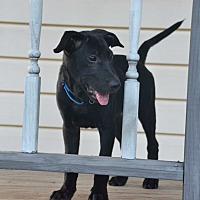 Adopt A Pet :: Jake - Alabaster, AL