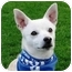 Photo 2 - Chihuahua Mix Dog for adoption in San Diego, California - Awesome