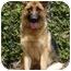 Photo 3 - German Shepherd Dog Mix Dog for adoption in Los Angeles, California - Tiffany von Tauben