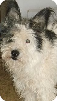 Terrier (Unknown Type, Medium) Mix Dog for adoption in Aloha, Oregon - Terrier Mix Adult