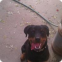 Adopt A Pet :: Nani - scottsdale, AZ