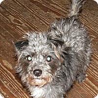 Adopt A Pet :: Muffy - Cincinnati, OH