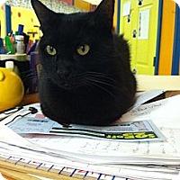 Adopt A Pet :: Esme - Mobile, AL