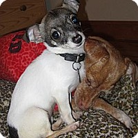 Adopt A Pet :: Peanut ADOPTION PENDING - Warwick, NY