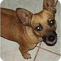 Adopt A Pet :: Rhonda - Gilbert, AZ