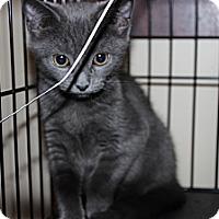 Adopt A Pet :: Jessie - Secaucus, NJ