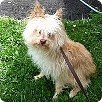 Adopt A Pet :: Dexter - Sheridan, OR