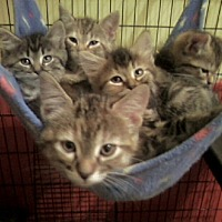 Adopt A Pet :: Foster Homes Needed - Taylor, MI