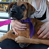 Adopt A Pet :: Navajo - Houston, TX
