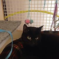 Adopt A Pet :: Hogan - Bridgeton, MO