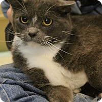 Adopt A Pet :: Twisp - Colorado Springs, CO