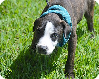 Terrier (Unknown Type, Medium) Mix Dog for adoption in San Leon, Texas - Page