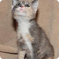 Adopt A Pet :: Clara - Helotes, TX