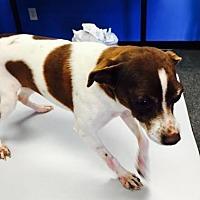 Adopt A Pet :: Bella - Christiana, TN