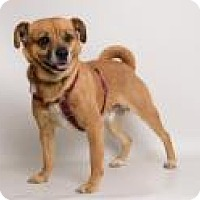 Adopt A Pet :: Copper - Santa Cruz, CA