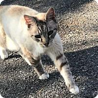 Adopt A Pet :: Thunder - Harrisonburg, VA