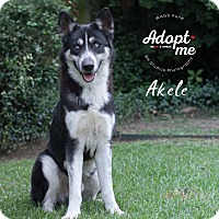 Adopt A Pet :: Akele - Houston, TX