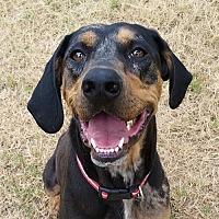 Adopt A Pet :: Susie - Guthrie, OK
