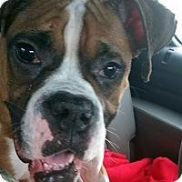 Adopt A Pet :: Rosa - West Bloomfield, MI