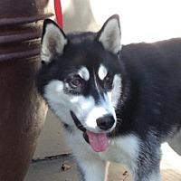 Adopt A Pet :: I1278028 - Pomona, CA