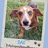 Adopt A Pet :: DAX - Lincoln, NE