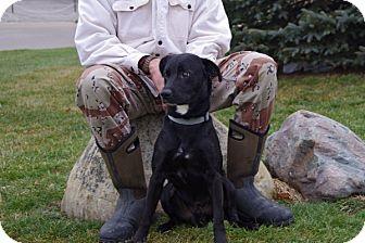 Labrador Retriever Mix Dog for adoption in Elyria, Ohio - Harper