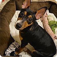 Adopt A Pet :: Pork Chop - Sun Valley, CA
