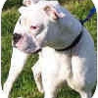 Adopt A Pet :: Magoo - North Haven, CT