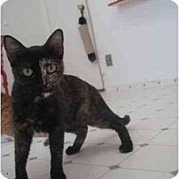Adopt A Pet :: Sue - El Cajon, CA