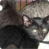 Adopt A Pet :: Kolby - Riverside, RI