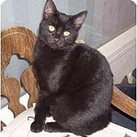 Adopt A Pet :: Snowball - Davis, CA
