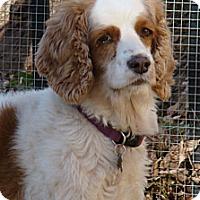 Adopt A Pet :: Millie - Sugarland, TX