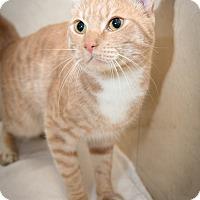 Adopt A Pet :: Randy - New York, NY