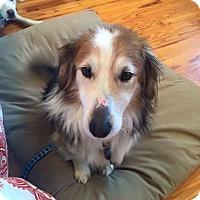 Adopt A Pet :: Nick - Morgantown, WV