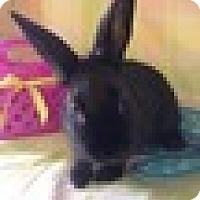 Adopt A Pet :: Mouse - Paramount, CA