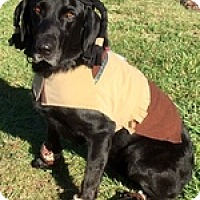 Adopt A Pet :: Alice J - Torrance, CA