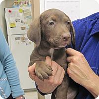 Adopt A Pet :: Ford - Albuquerque, NM