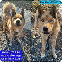 Adopt A Pet :: Baby Boy - Small Senior Husky - Quentin, PA