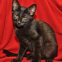 Adopt A Pet :: Salem - Garland, TX
