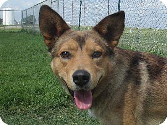 Mixed Breed (Medium) Mix Dog for adoption in Lloydminster, Alberta - Duncan