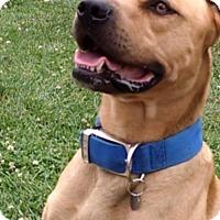 Adopt A Pet :: Roux - Eldora, IA
