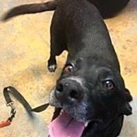 Adopt A Pet :: Kelly - Brownwood, TX