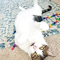 Adopt A Pet :: Newman - Oakland, CA