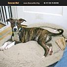Adopt A Pet :: Eleanor - cuddly & playful
