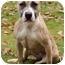 Photo 3 - Pit Bull Terrier/Labrador Retriever Mix Dog for adoption in Chicago, Illinois - Sandy