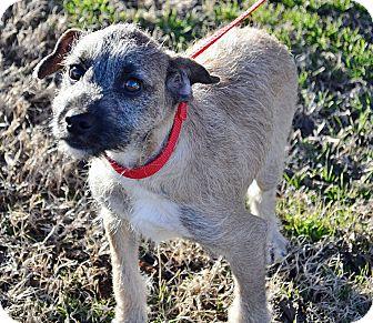 Terrier (Unknown Type, Medium)/Terrier (Unknown Type, Medium) Mix Dog for adoption in Searcy, Arkansas - Tuffy