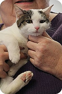 Domestic Shorthair Cat for adoption in Marietta, Georgia - Garbo